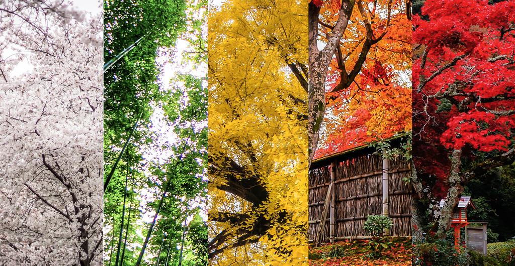 עונה מומלצת לטיול ביפן