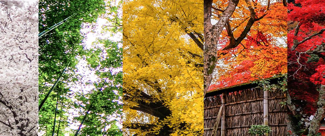 עונות השנה ביפן